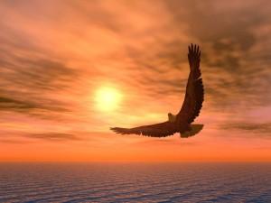 eagle3-1024x768