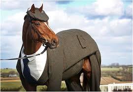 лошадь в костюме